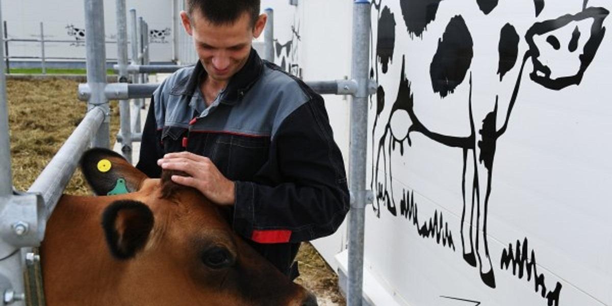 RFID-ушных бирок, КРС, «Ферма М2», прослеживаемость, идентификация