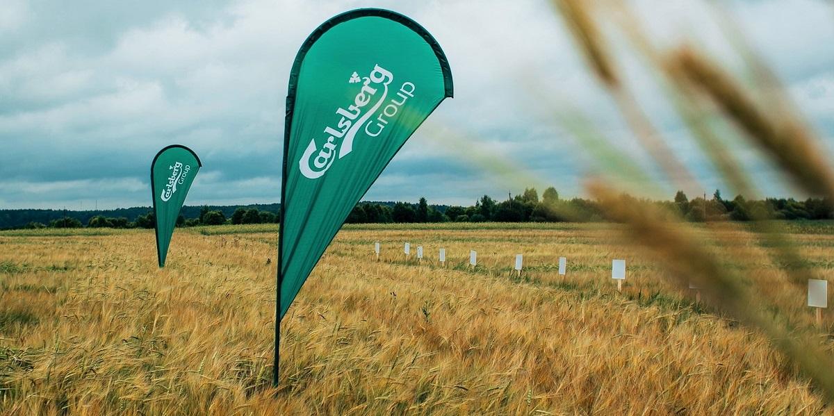 Carlsberg Group, «Хоппи Юнион», ячмень, урожай 2020, осень 2020