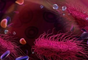Сальмонелла, бактерии