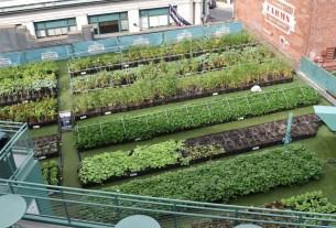 Германия, мини-огороды, овощи, огород на крыше