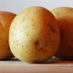 Картофель, Россия, урожай