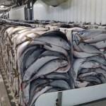 Дальний Восток, хранение рыбы, склады