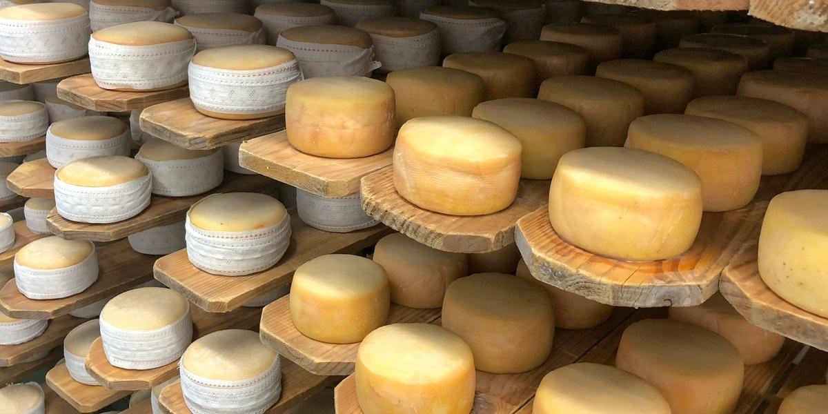 «Сырная долина», Подмосковье, сырный кластер