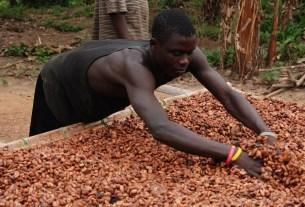 Noha Nyamedjo Group, Месак Ноа, «Объединенные кондитеры», трансфер технологий, производство, какао
