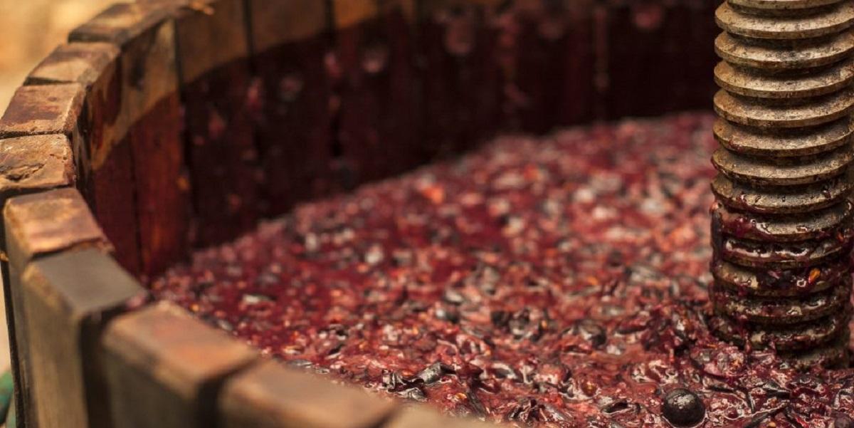 Органические удобрения, удобрения из переработанного винограда, СевГУ, виноградство, Севастополь