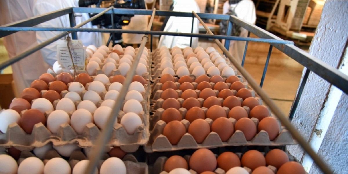 закупка яиц, яичные торги, тендер, Минсельхоз