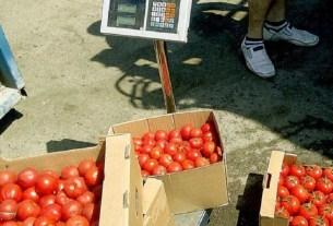 помидоры с грядки, урожай с пашни, продажа с пашни, разрешение с грядки
