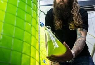 Пивоварня Young Henrys, пиво водоросли, экопиво, пиво без выбросов, зеленое пиво