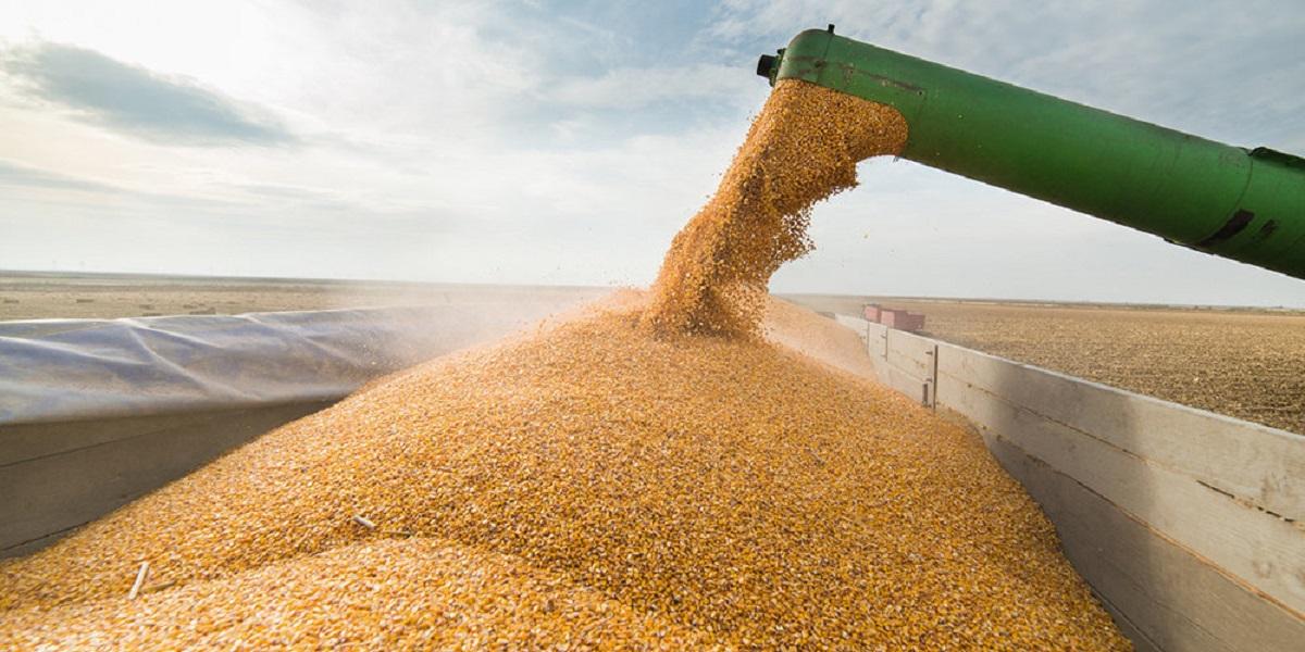 госфонд, госзапас, запас зерна, цены на хлеб, Правительство России