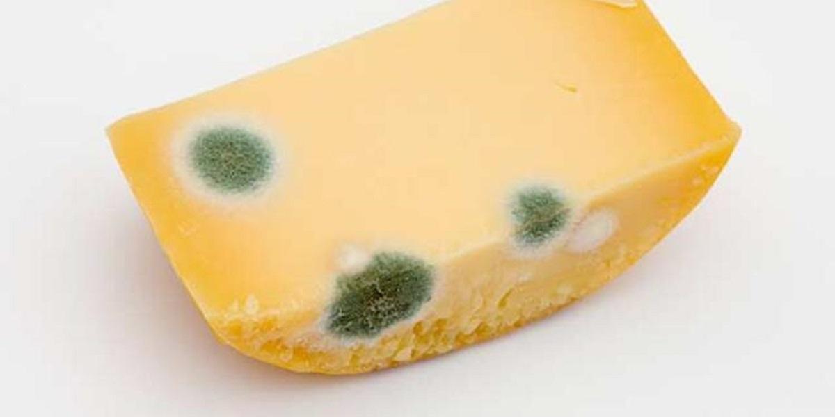 сыр с плесенью, плохая плесень, нечерная плесень, контроль плесени, Мишустин