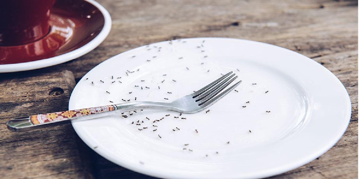 Ресторан, насекомые, вредители