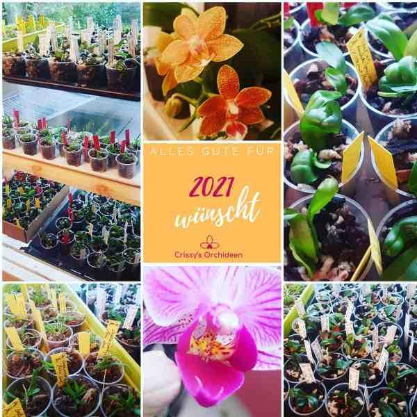Orchideen Kalender 2021