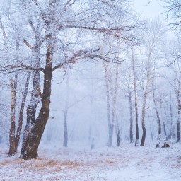 The Dreaded Weather: Fibromyalgia's Nemesis