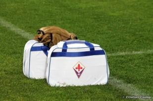 Pandurii Tg Jiu - Fiorentina_2013_11_06_033