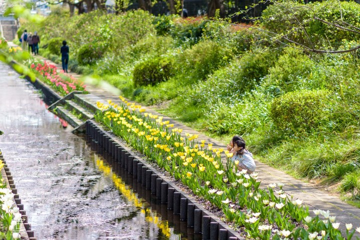 Little girls admiring yellow tulips on the side of a small river stream in Yokohama, Japan. Image taken by Cristian Bucur photographer in Tokyo