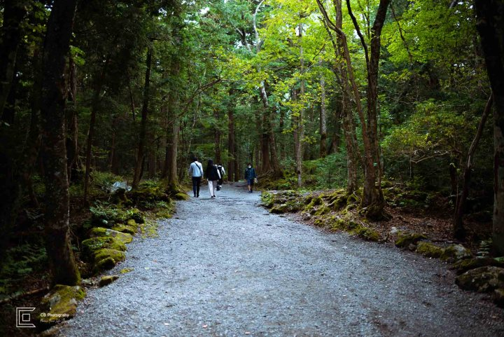 The road path leading to Fugaku Wind Cave in Aokigahara Forest