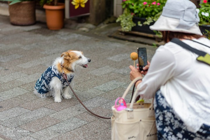Woman taking a photograph of her dog on Yokohama Chinatown's streets