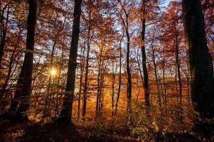 Outono na Alemanha. (Foto Jeremy Fairbrass)