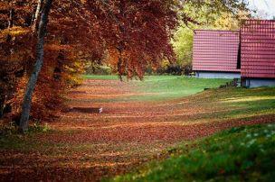 Outono nas ruas da ALemanha - Bayern (Foto Jeremy Fairbrass)