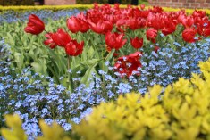 Primavera nos jardins de keukenhof - Holanda