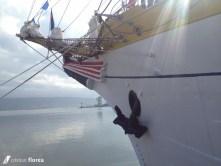 aventura pe o nava cu panze - constanta varna 86