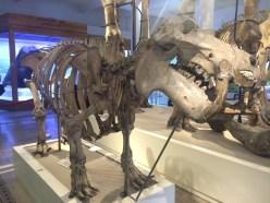 muzeul-national-de-istorie-naturala-grigore-antipa-cristian-florea-3