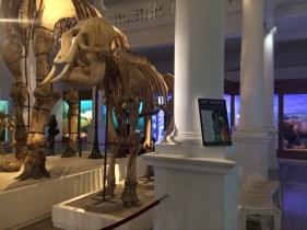 muzeul-national-de-istorie-naturala-grigore-antipa-cristian-florea-4