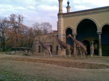 Berlin Zoological Garden Part . Simple & Interesting