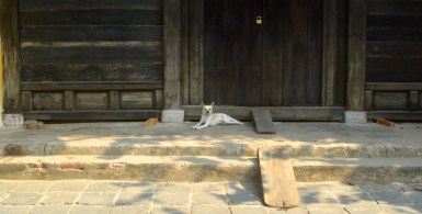 one of the 1,045 adorable mutts in Hoi An