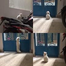 Frank enjoys watching the neighborhood activity...