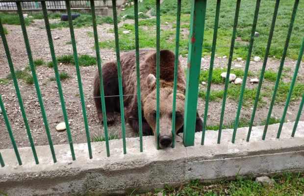 Grădina Zoologică Pitești