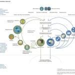 La Regulación de Residuos en México en el Siglo 21 y hacia la Economía Circular