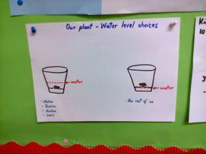 water level - plants