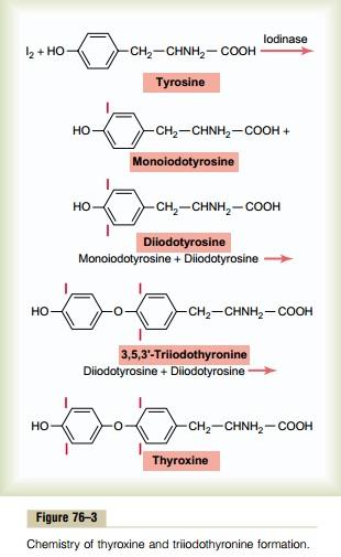 רמות בלוטת תריס הורמון ופחמימות (קטוגנית) תזונה נמוכה מאוד - T4 T3 והיווצרות