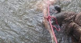 Localizan el cuerpo de una mujer en el río, en Tasquillo