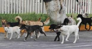 Animalistas piden apoyo para el centro de Control Canino Metropolitano