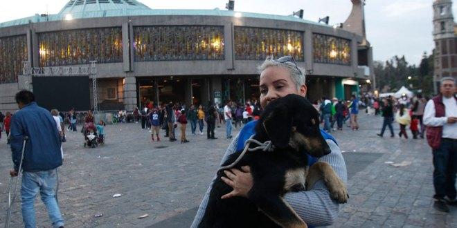 se dedican a recoger perros abandonados