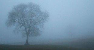 niebla neblina
