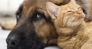 Realizarán esterilización gratuita de mascotas en Pachuquilla