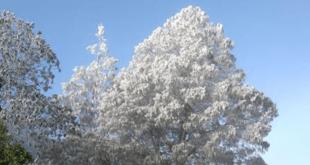 Heladas en Hidalgo: termómetro marcó hasta -3 grados; seguirá el frío