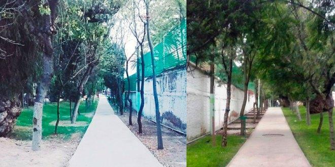 Niega alcaldía de Pachuca que se planee talar árboles de Cuesco