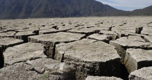 Por sequía, murieron 50 toneladas de peces en la laguna de Metztitlán