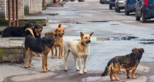 Urgen centro bienestar perros Tizayuca