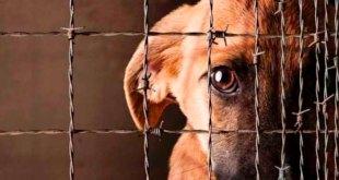cinco años cárcel maltrate animales