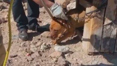 Rescatan perro maltratado Mineral de la Reforma