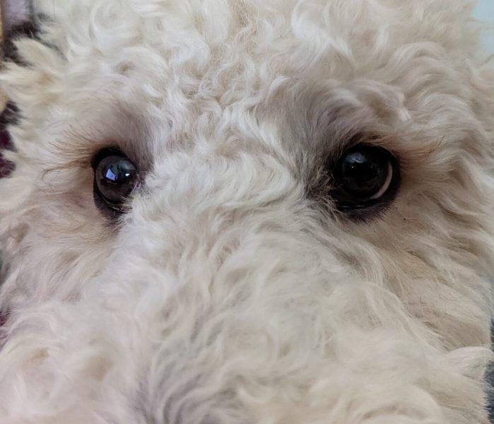 Bentley Eyes