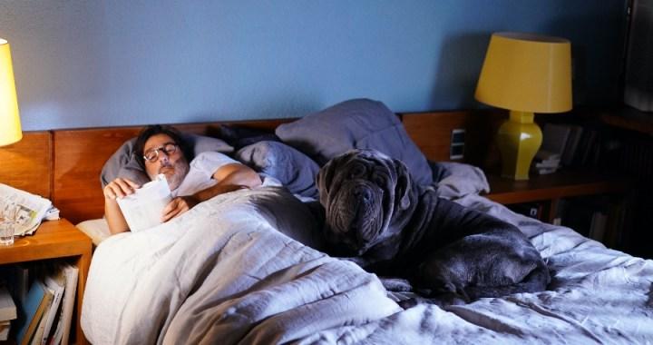 Mi perro tonto – 24º Tour de cine francés