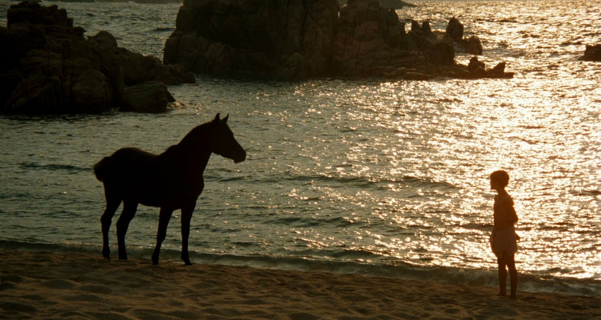 the-black-stallion1
