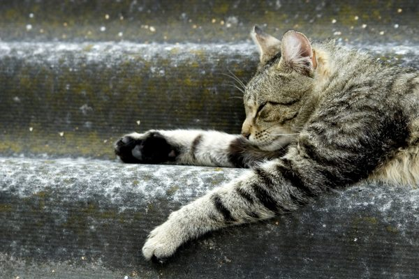 How Long Is It Safe To Leave Your Cat Alone At Home In