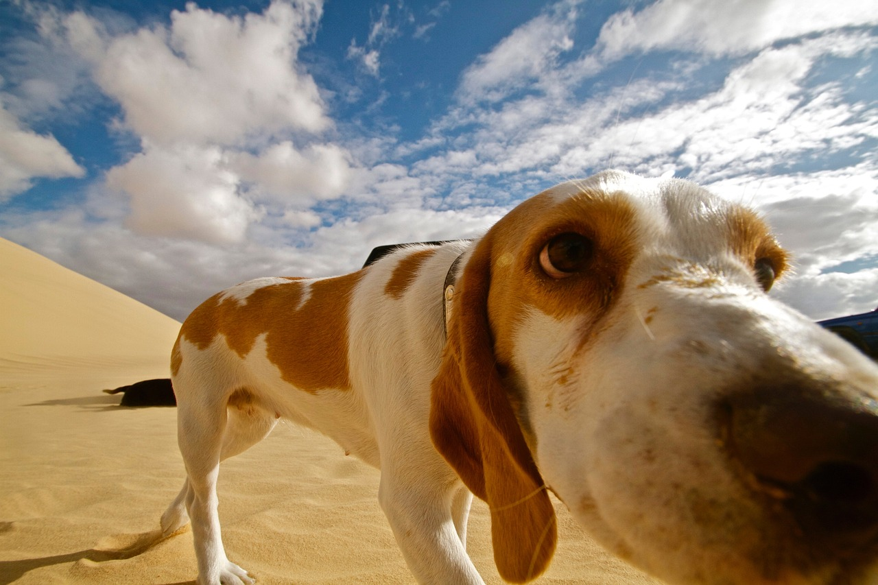 dog desert animal Critter Caretakers Pet Services The Ridiculous Things We Do With Your Pets When You Aren't There...